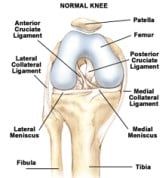 Normal Knee Diagram